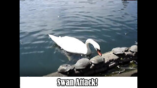Bully Attack