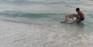 Já viu um cão fazendo skimming?