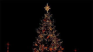 The science behind growing the perfect Christmas tree
