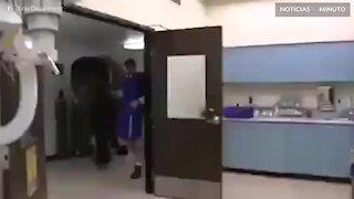 Como fazer o raio-x de um elefante