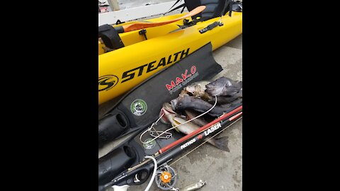 Spearfishing Carmel for Rockfish and Exploring The Kelp Beds