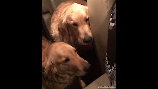 Guilty dogs not looking forward to time-out punishment