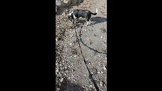 Walking My Doggo
