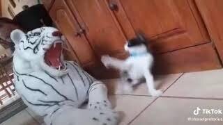 Shot on iPhone meme Cat vs Tiger