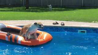 Dog jumps on pool float, owner epically fails