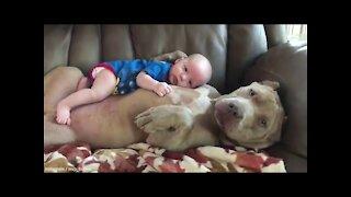 Child sleeps with puppy baby sleep with Pitbull!!