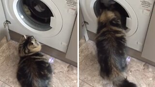Cat's favorite activity is playing with the washing machine