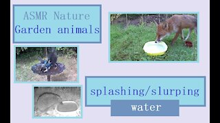 Nature sounds of our Wildlife Oasis guests drinking and bathing