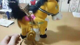 Il gatto spaventato dal pony giocattolo