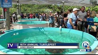 16th annual Turtlefest held in Juno Beach