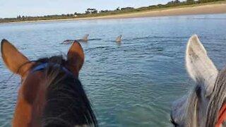 Cavalli e delfini e possono essere amici!
