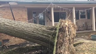 Family inside home when giant tree fell, crushed Akron home