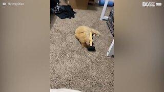 Ce chat a une étrange fascination...