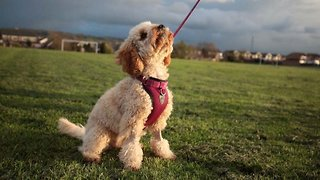 Heartbroken Pet Owner's Pooch Nearly Killed After Fatal Rasins Scattered Across Park