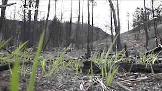 How wildfires can impact soil and cause it to repel water