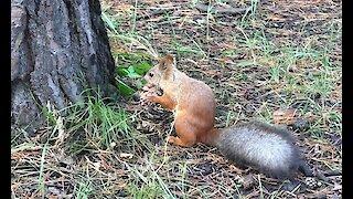 Squirrel fuss.
