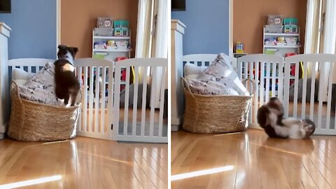 Puppy tries to mimic dog, ends up with adorable fail
