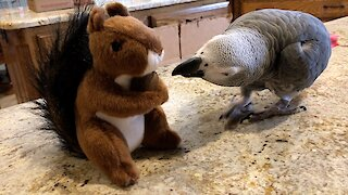 Squirrel stuffed animal shares treat with a friendly talking parrot