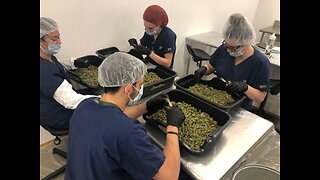 Ohio's Medical Marijuana industry helping workers in shrinking industries shift into new careers