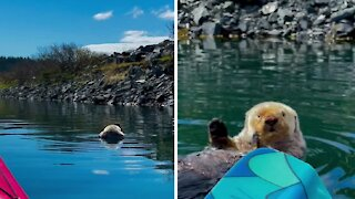Most relaxed otter ever chills in the harbor