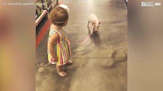 Bambina porta a spasso il maialino con il guinzaglio