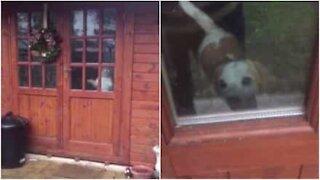 Cane intrappolato nella casetta!