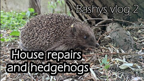 House repairs and hedgehogs - Vlog 2