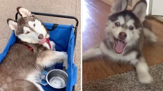 Adorable Dog With Special Needs Lives Best Life Despite Motor Impairment