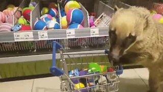 Denne nesebjørnen er den beste shopping-kameraten!