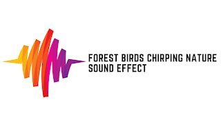 Forest Birds Chirping Nature Sounds