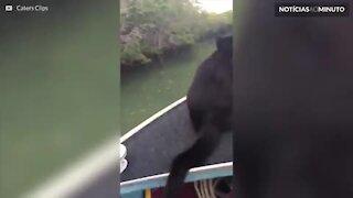 Conheça o gato que adora àgua!