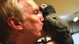 Parrot gives heartwarming welcome as owner returns from trip