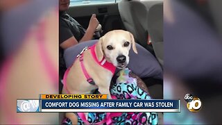 Comfort dog missing after family car was stolen