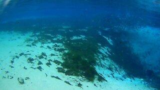 Florida Snorkeling Adventure