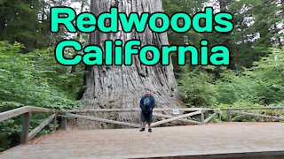 Walking In The Redwood Forest California