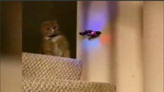 funny pet video 1