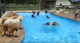Koiralauman hulvattomat uima-allasbileet!