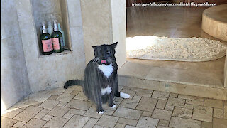 Water-loving cat enjoys a drink in the shower