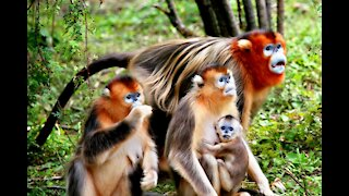 Wild baby Monkey and visitor For funny video!! Amazing Wildlife
