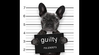 Hilarious Guilty Dogs Caught Red Handed
