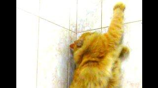 Blowing away my cat