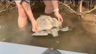 Family rescues turtle in Australia