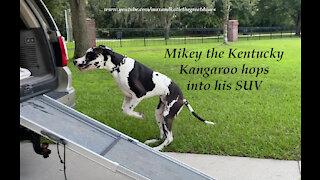 Mikey the Great Dane aka The Kentucky Kangaroo Slo Mo SUV Hop
