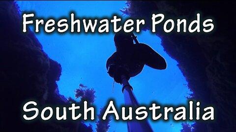 Freediving Freshwater Ponds, South Australia