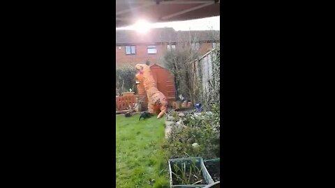 T. rex vs french bulldog