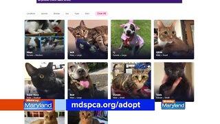 MDSPCA - Virtual Adoptions