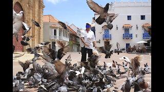Arlides Beleno, el hombre que alimenta a las palomas de San Pedro