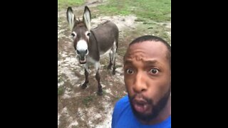 Singer's hilarious duet with a donkey