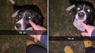 Puppy caught throwing backyard party with neighbor dogs