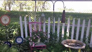 Melinda's Garden Moment - Dress up a wall or fence